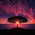 tree sunrise meditation